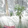 palomamoya_20120723_0139